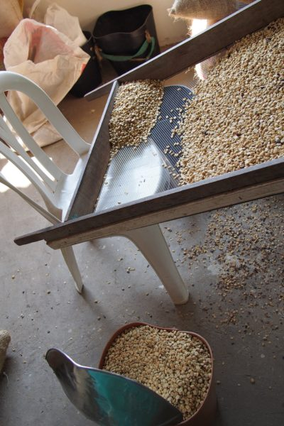 コーヒー農園 ツアー サレント