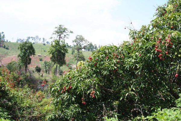南国 フルーツ