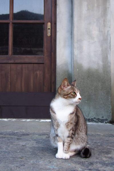 台湾 猫の村 猴硐